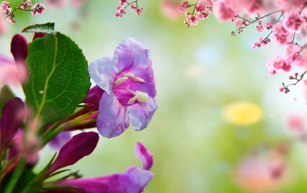 regina florilor
